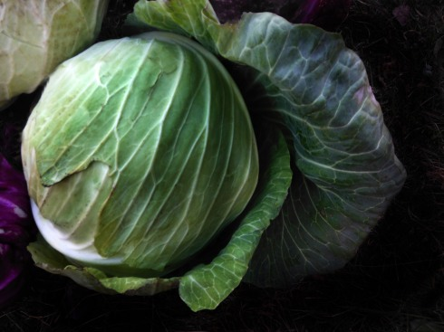 JANEcabbage